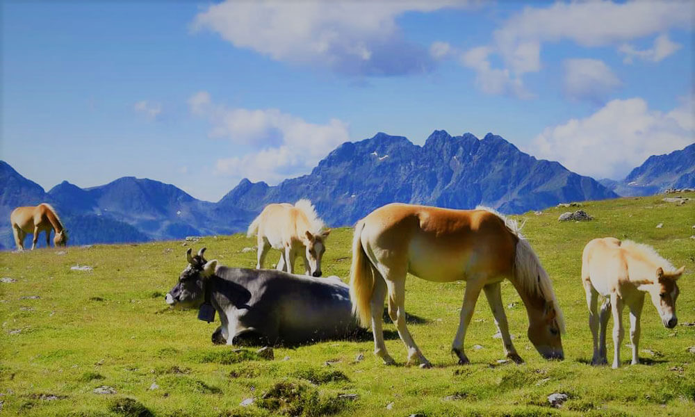 Horse riding holidays in Casteldarne / Chienes - Val Pusteria