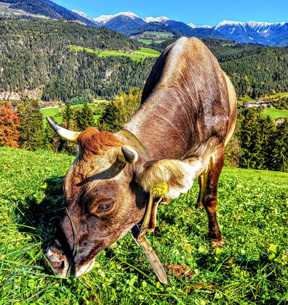 Conoscere gli animali del maso – Alto Adige